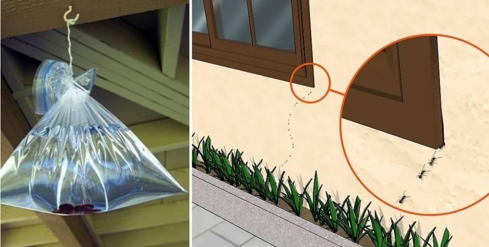5 simples trucos y ningún insecto volverá a pisar tu hogar