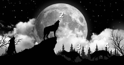 Test: elige un lobo y averigua cuándo necesitas la soledad