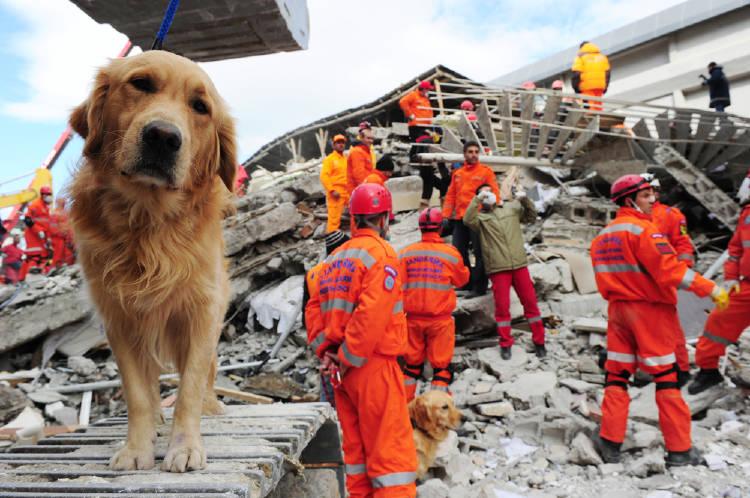 perro terremoto