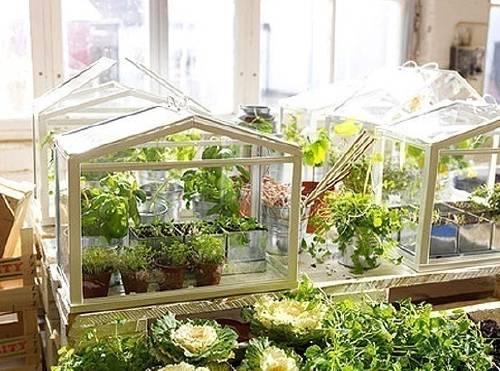 Cómo construir un mini-invernadero para tu balcón