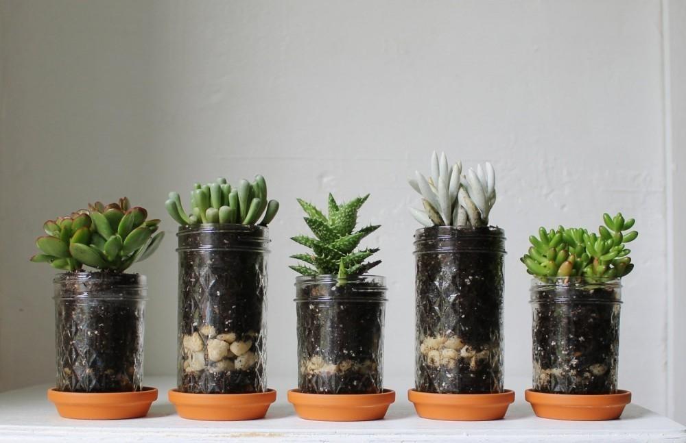 5 ideas para llenar de vida casas sin jard n for Bioguia jardines