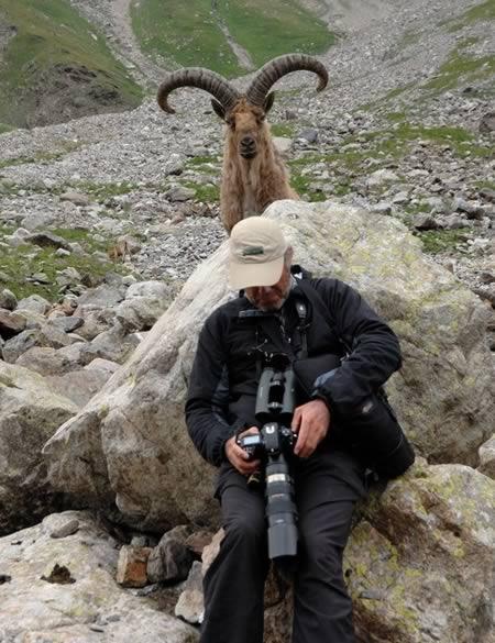 a98486_animal-bomb_3-goat