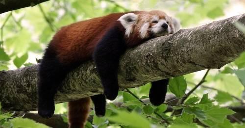 Mejorar la calidad del sueño: Haz este movimiento antes de dormir y el sueño..
