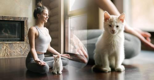 Así puedes meditar con tu gato, y tiene muchos beneficios