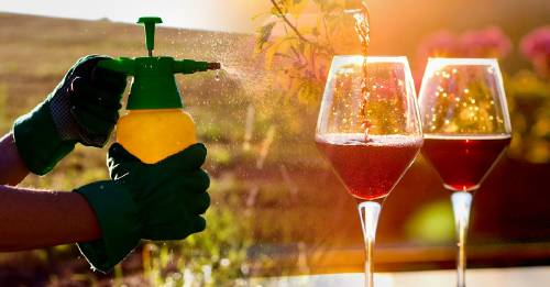 Encuentran glifosato en 20 bebidas alcohólicas