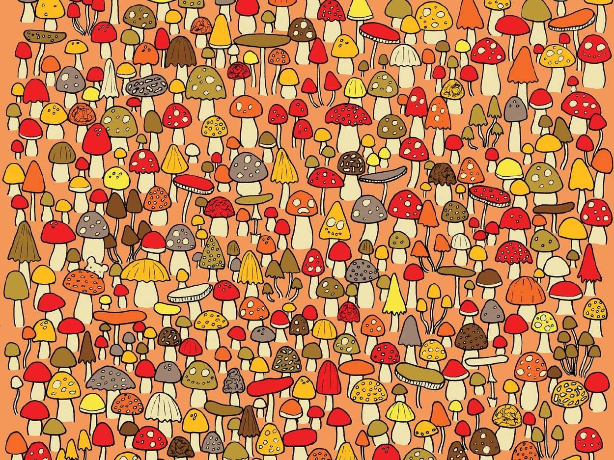 Reto visual: ¿puedes encontrar al ratón que está escondido?