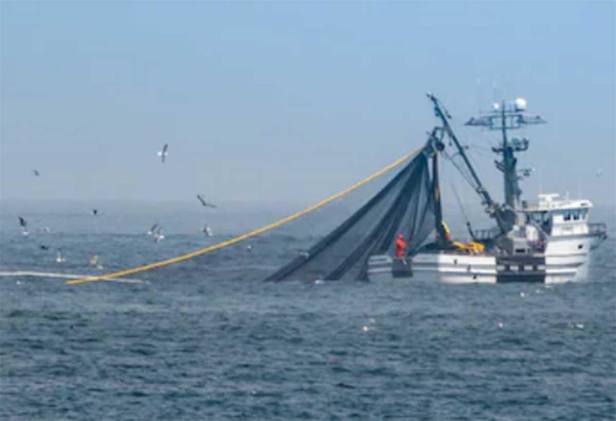 Al menos 27 pesqueros chinos amenazan los recursos del Mar Argentino