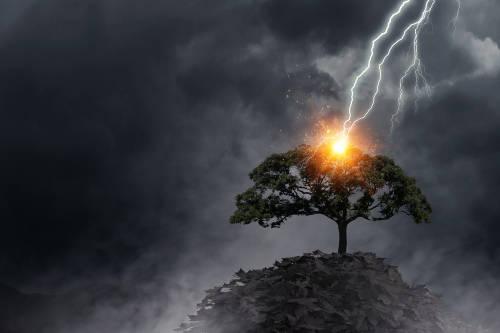 Video viral: un árbol arde desde adentro luego de ser golpeado por un rayo