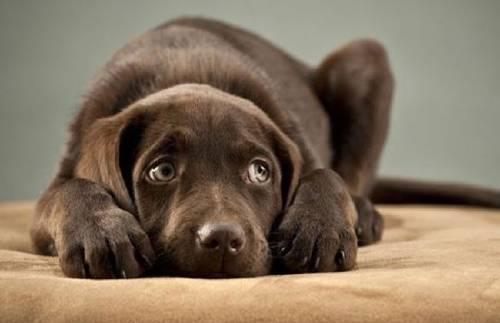 Vendaje anti-ansiedad y consejos para calmar a tu perro si se asusta por la pi..