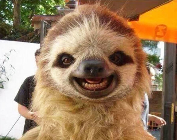 smiling-animals-4