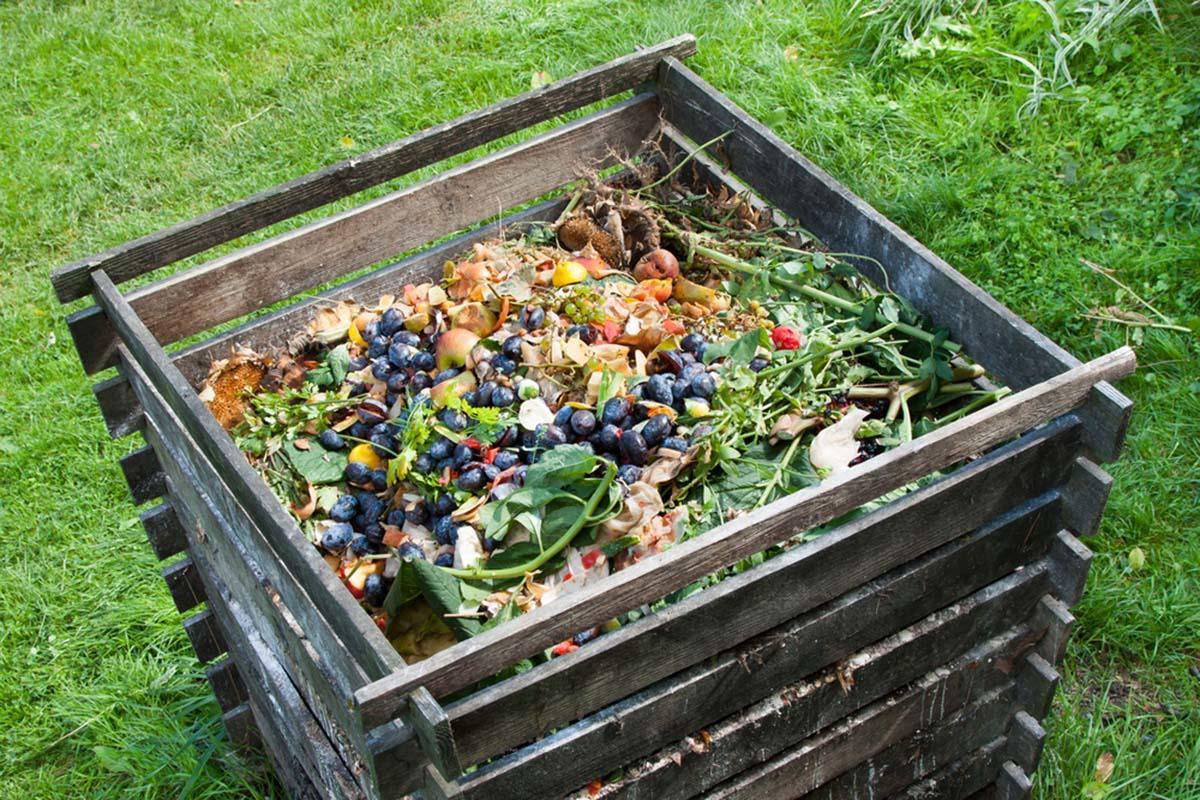 Bocashi y compost: descubre todas las diferencias entre estos dos abonos natural