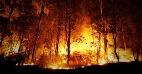 Todo lo que necesitas acerca de los incendios en Australia