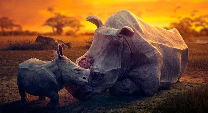 Dream: el desgarrador corto musical sobre los sueños de animales en peligro que tienes que ver