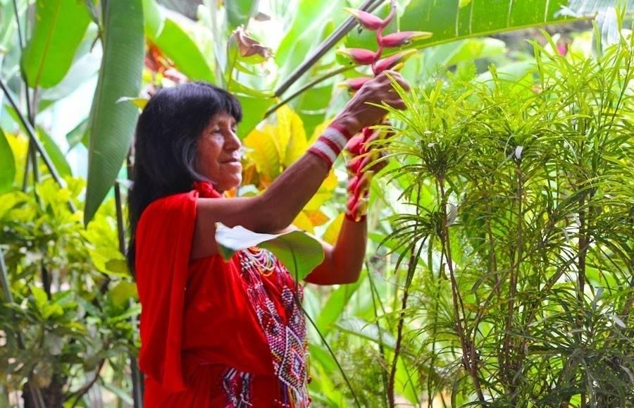 5 plantas shamánicas que sanan tu cuerpo