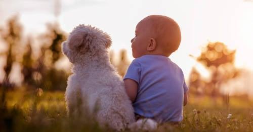Esta es la razón por la que los perros cuidan a los bebés