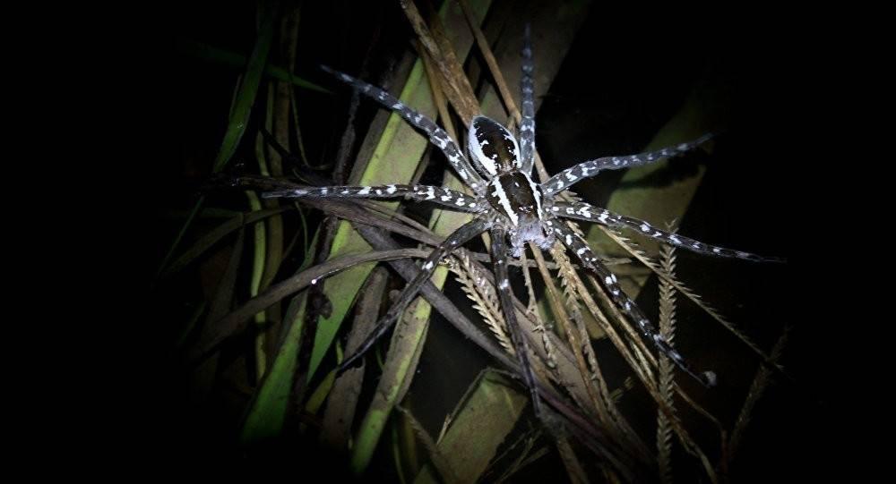 Descubren dos nuevas especies extrañas en el mundo