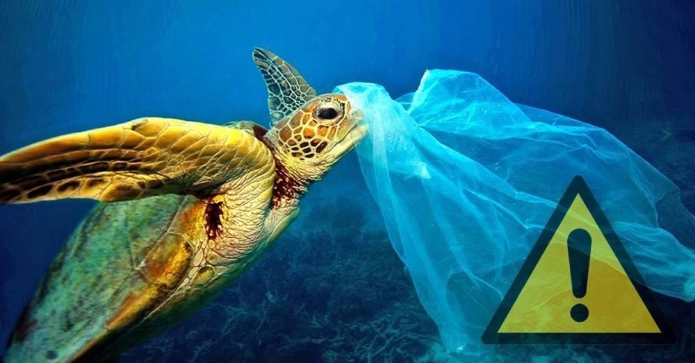 Encontraron una bolsa de plástico en el lugar más preocupante del océano