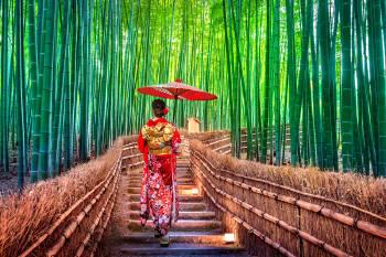 mujer japonesa con paraguas en una camino de bambu