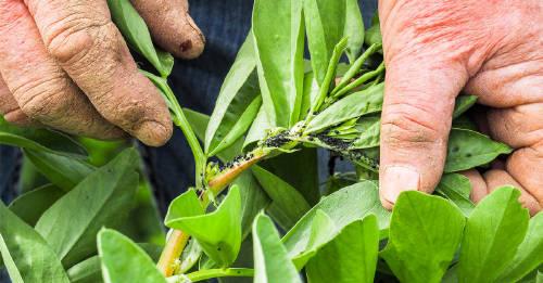 Identifica qué plaga se come las hojas de tus plantas y aprende a combatirla