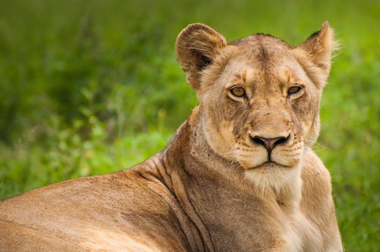 SA. Kruger 4