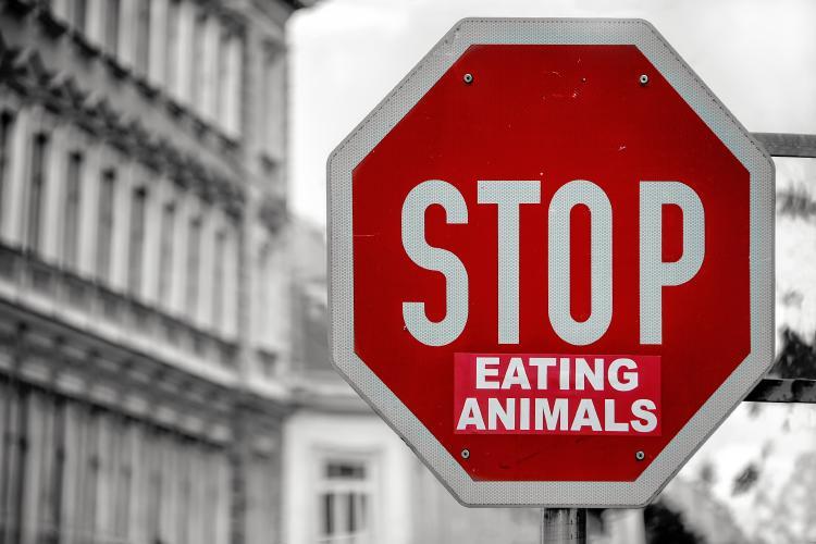 datos curiosos veganismo