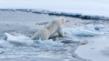 Un uso polar en Groenlandia