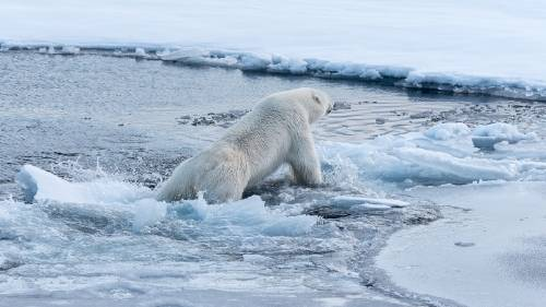 Se derritieron 12.000 millones de toneladas de hielo en Groenlandia en un día