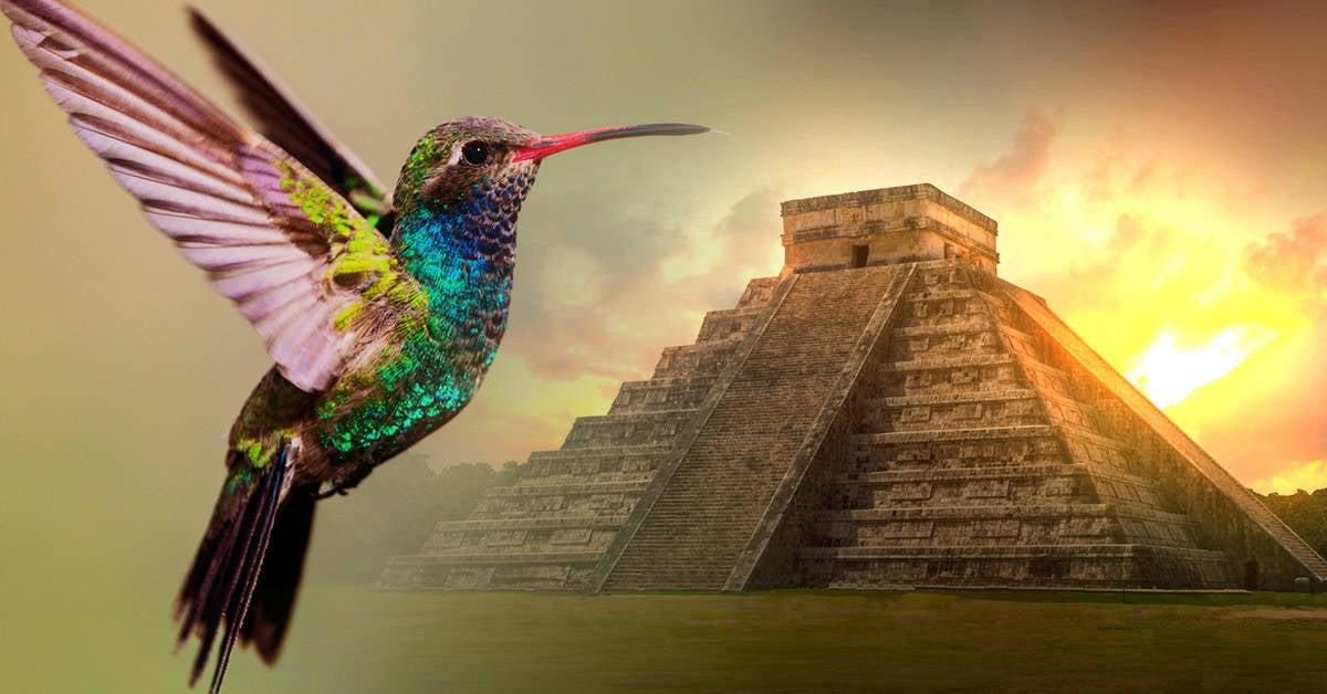 La leyenda maya del colibrí que conmueve a niños y adultos