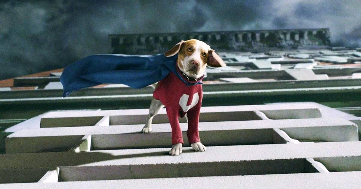 Estos animales merecen su propia película de superhéroes