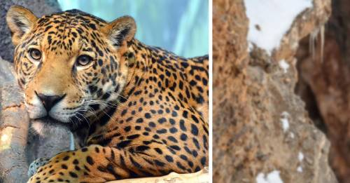 Esta foto viral esconde a un leopardo en una montaña. ¿Puedes verlo?