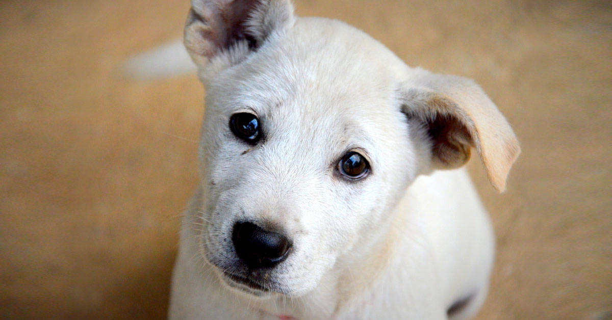 Popeye: el perro que pasó de vivir en la calle a recomendar restaurantes