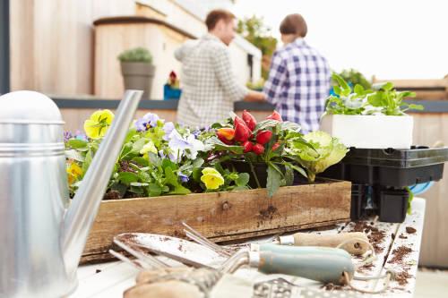 Cómo puedes hacer una huerta orgánica indoor paso a paso