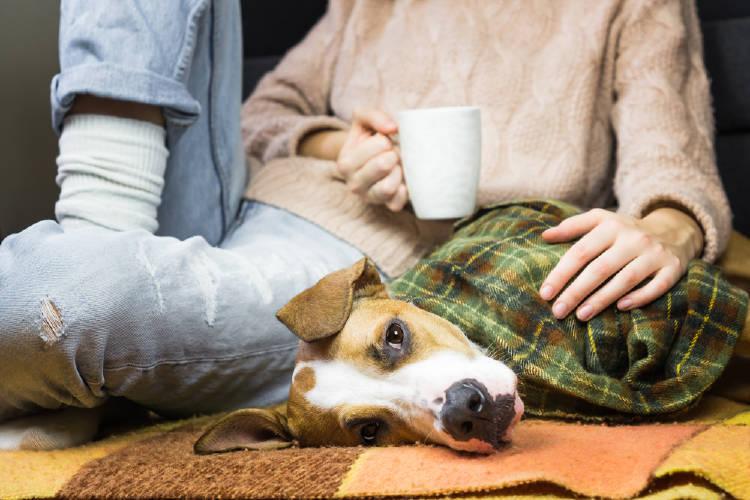 perro manta cafe