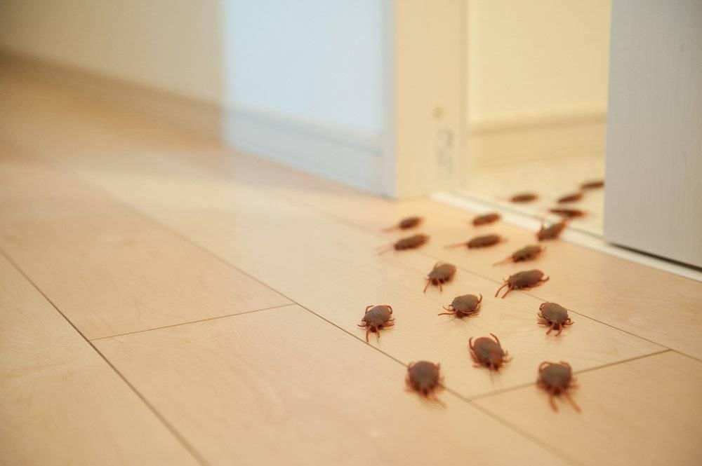 ¿Habrá invasión de cucarachas en España? Esto tienes que saber