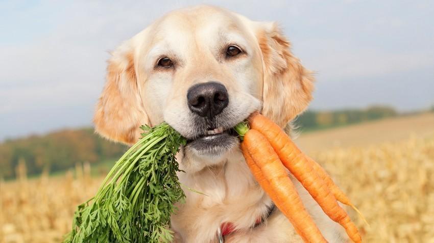 Es adecuado comprender mejor los factores que influyen en la decisión de abstenerse de los productos de origen animal.