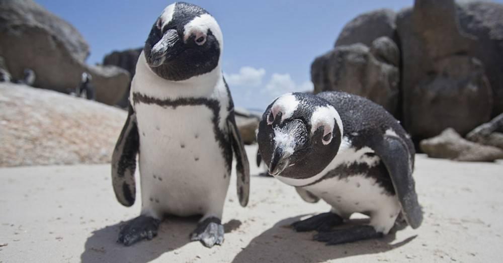 ¿Por qué murieron más de 40 mil pingüinos en la Antártida?