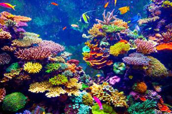 arrecifes coral