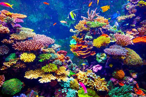 Prohíben los protectores solares tóxicos para preservar los arrecifes de coral