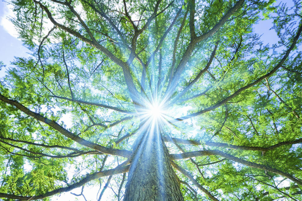 Conoce a la joven estadounidense que pasó 738 días en un árbol