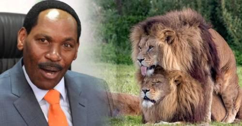 La imagen de los dos leones teniendo relaciones sexuales causa polémica mundial.
