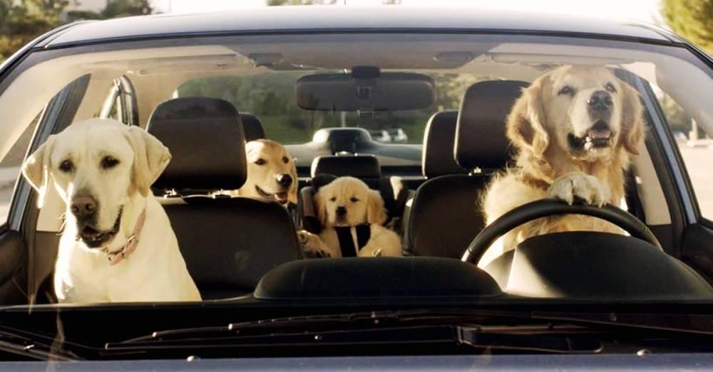 Hay 10 tipos de conductores y todos dicen algo sobre tu personalidad. ¿Cuál ..