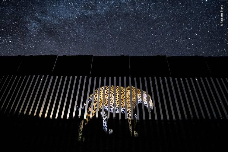 Alejandro Prieto - Wildlife Photographer of the Year