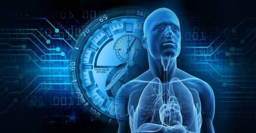 El curioso mecanismo del reloj biológico que descubrieron los ganadores del N..