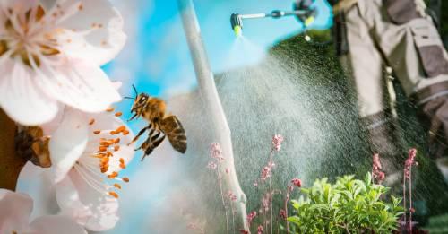 Comprueban que el glifosato daña a las abejas y, con ellas, a toda la vida