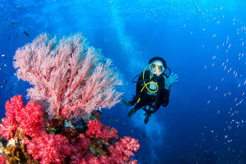 """""""En busca del coral"""" exhibe la fragilidad oculta bajo el agua"""