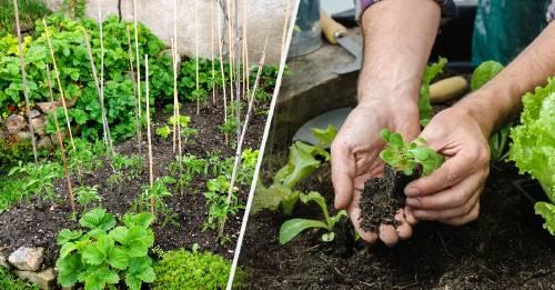 Estos son los cultivos más fáciles para empezar la huerta en casa