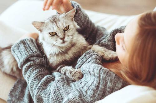 Las 5 cosas que los gatos odian de los humanos