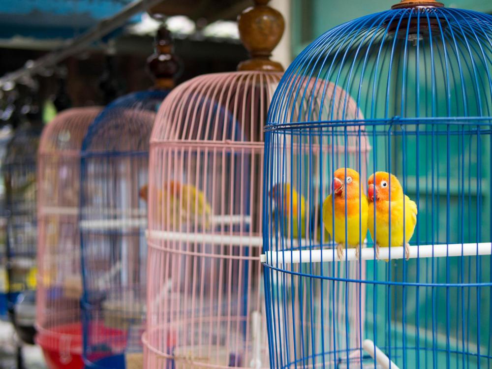 París cerrará su histórico mercado de aves después de 213 años