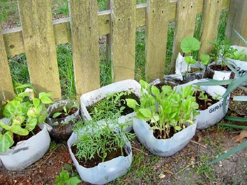 Cómo germinar rápidamente tus semillas