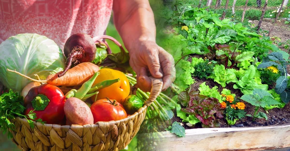 Haz una huerta en un metro cuadrado y cosecha kilos de verdura biodinámica